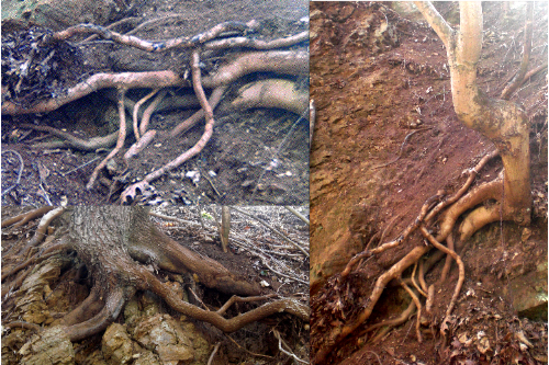 root-collage