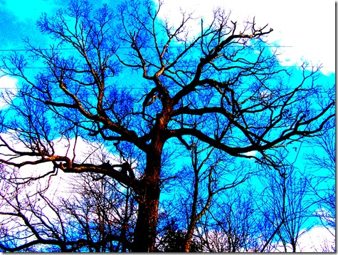 big tree blue sky